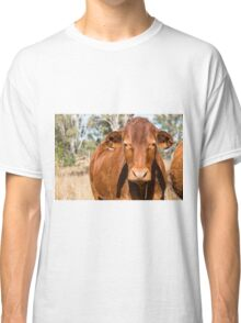 Cow in the paddock  Classic T-Shirt