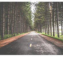 Tree Road Photographic Print