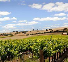 Australian Vineyard Landscape by jwwallace