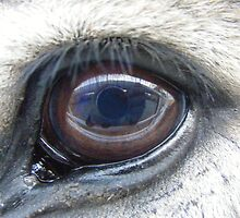 Buford's Eye by Marie Smith