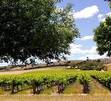 Australian Vineyard Landscape by John Wallace
