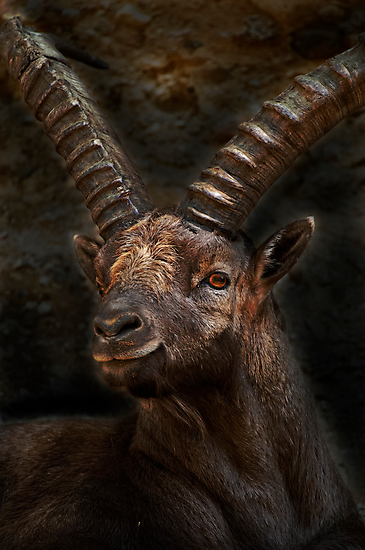 Ibex - Photoshop Manipulation by Michael Cummings