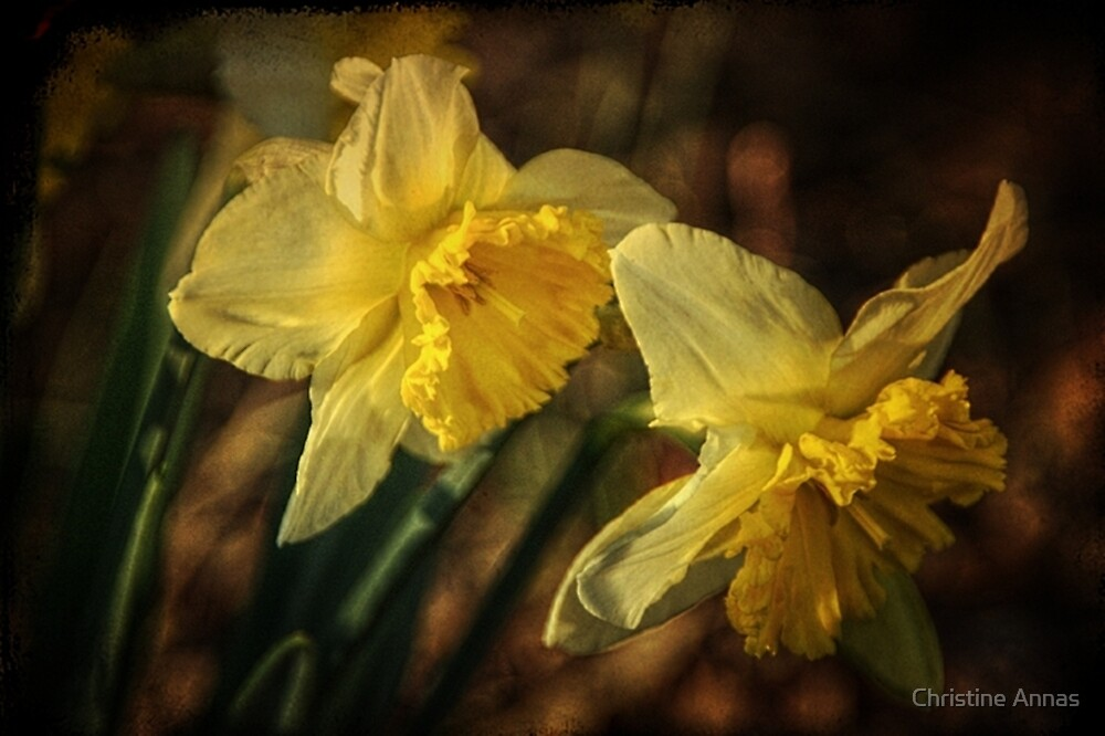 Daffodil Afternoon by Christine Annas
