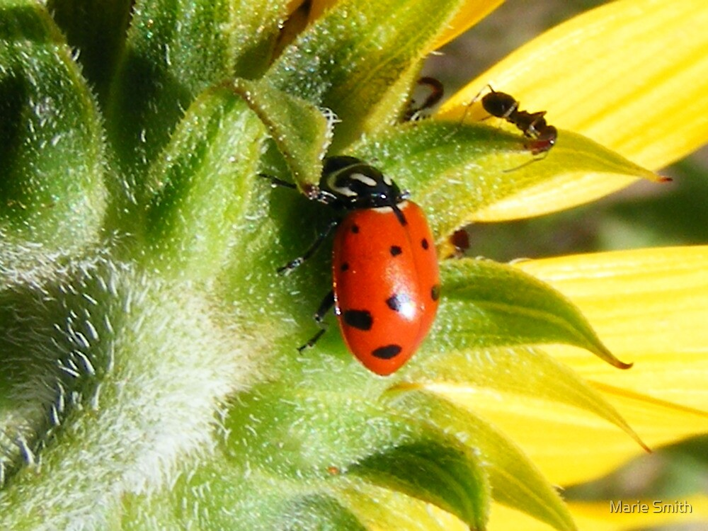 Ladybug at Rest by Marie Smith