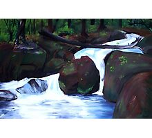 Tranquil Forest Stream Photographic Print