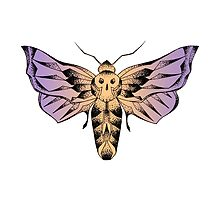 Moth with skull / Papillon de nuit et crâne by creaturedesign