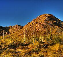 Saguaro National Park by Justin Baer