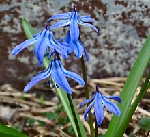 Blue Flowers by Sheri Nye
