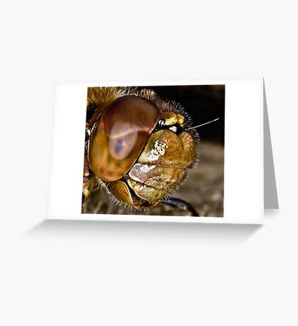 Darter Greeting Card
