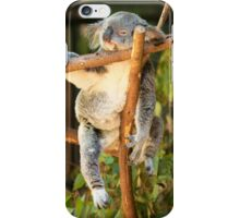 Tuckered out Koala by itself in a tree. iPhone Case/Skin