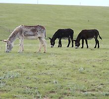 Three Burros by Marie Smith