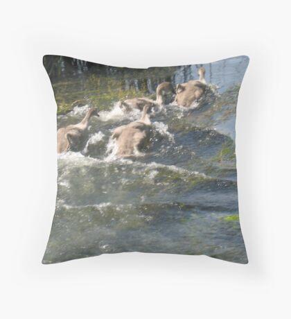Cygnets- WaterFun Throw Pillow