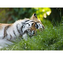 Playful Kitty Photographic Print