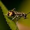 Ants - (Insects, Spiders & Other Category)