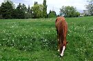 Spring Pasture  ~ Quarter Horse by Jan  Tribe