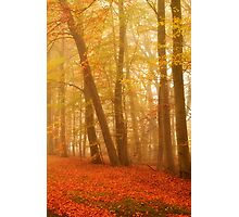 Russet and Gold Photographic Print