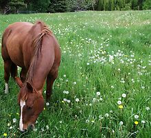 Horse among the Dandelions by Jan  Tribe