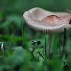 Wild Mushroom/Toadstool Close-up by mltrue