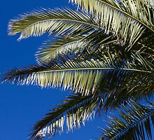 Palms by AmandaKopcic