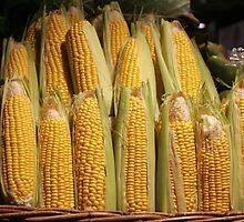 Corn by Tessa Manning