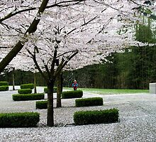A child giggling under his own shower of cherry blossoms by Gaetan