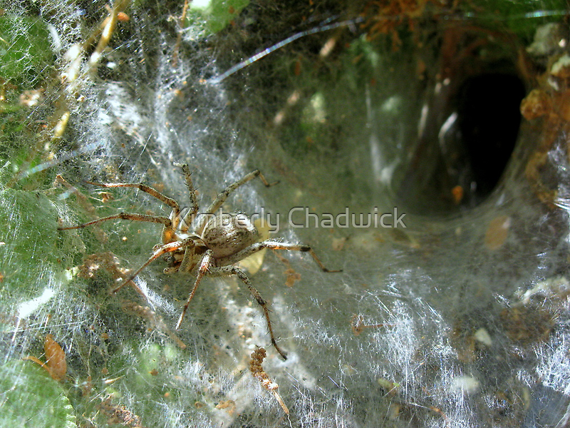 Funnel Web Spider ~2 by Kimberly Chadwick