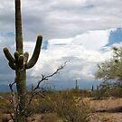 Sonoran Desert Scene by Kimberly Chadwick