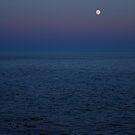 Silent Night by Anne McKinnell