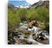 McGee Creek - Early Summer Flow Canvas Print