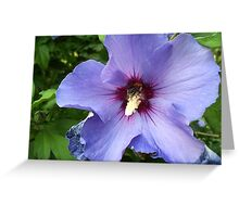 Beauty with a Flaw Greeting Card