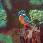 The Kingfisher by philip gray