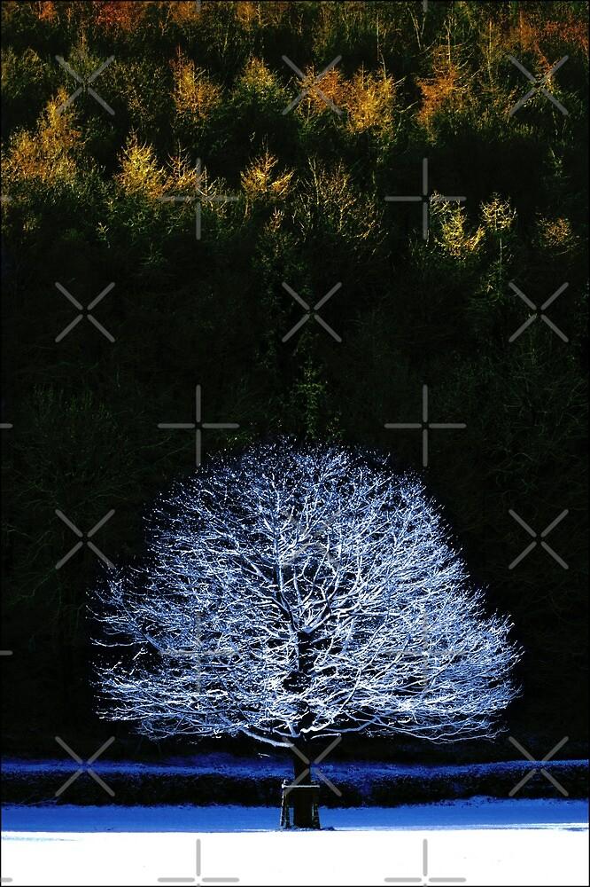 Snow Tree by Yampimon