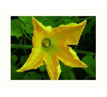 Zucchini Blossom/ Courgette Art Print
