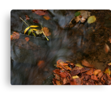 river in autumn III Canvas Print