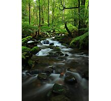 The  Warburton Rainforest Gallery. Photographic Print