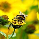 Bee #6 by Trevor Kersley