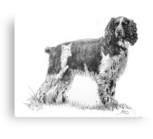 spaniel dog Canvas Print