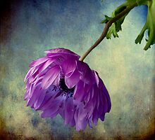 Melancholy Memories by Wendi Donaldson