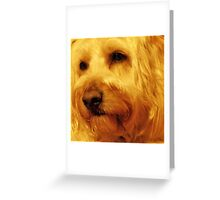 Isn't He Gorgeous!! Greeting Card
