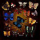 Wings by Debra Keirce