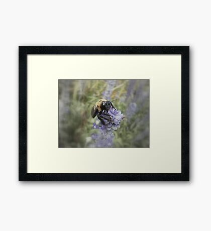 Bumble Framed Print