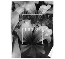 black and white flowers - the 1975 Poster