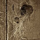 Keyhole Web by Paul Thompson