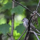 Profile of a titmouse  by mltrue