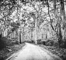 Boranup Forest b&w by nadine henley