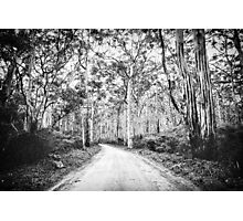 Boranup Forest b&w Photographic Print