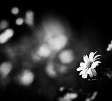 Bokeh Flowers by busidophoto