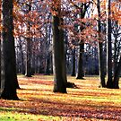 The Trees of Autumn by Mary Tomaselli