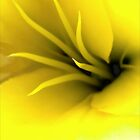 This Lily Likes Yellow by paintingsheep