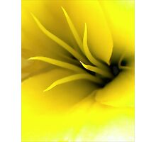 This Lily Likes Yellow Photographic Print
